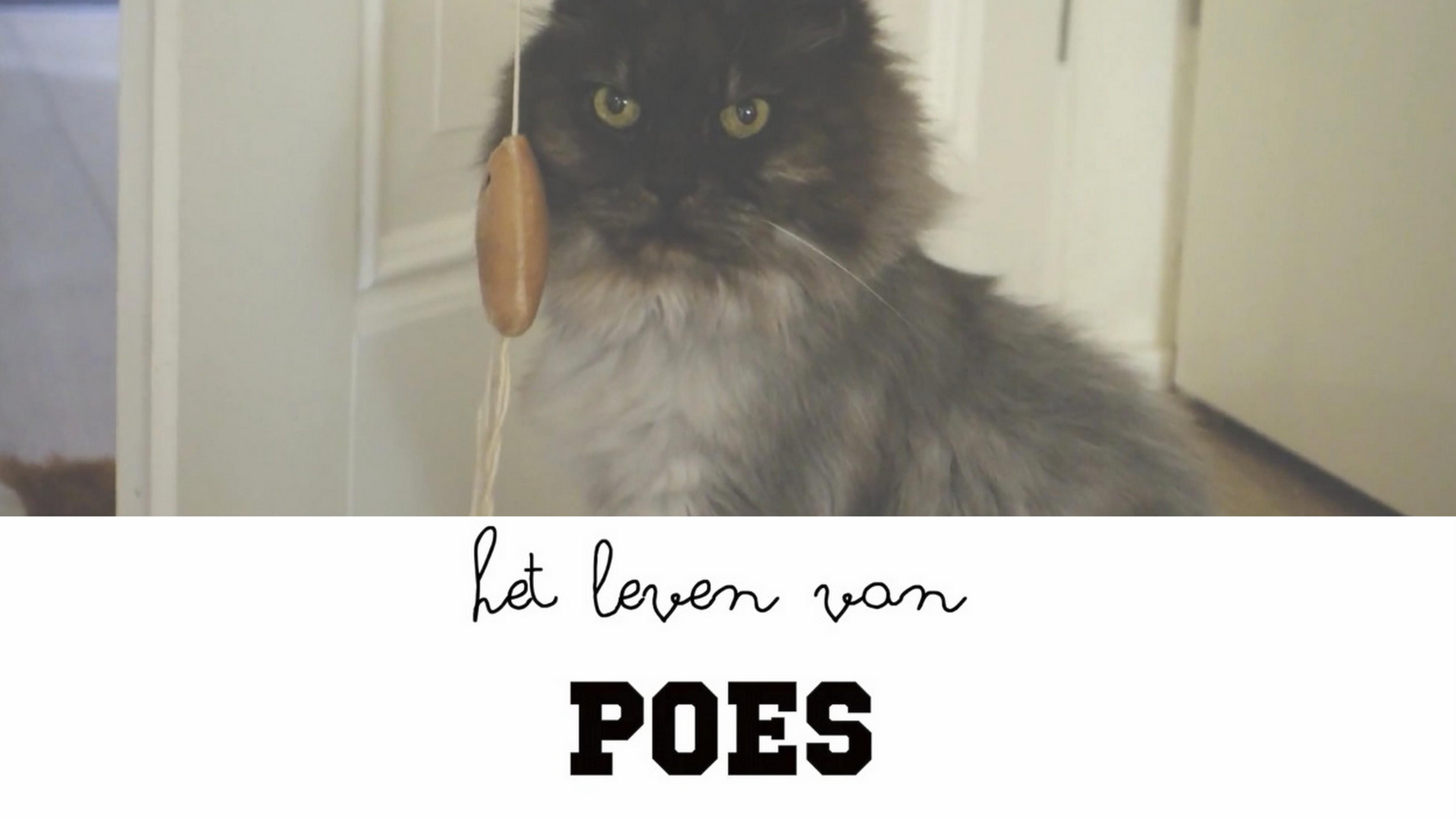 Het leven van Poes