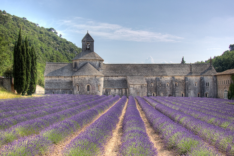 lavendel Frankrijk