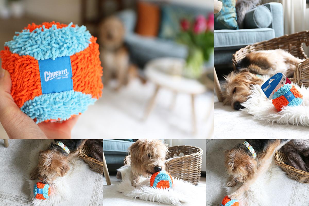 Het beste speelgoed voor je hond