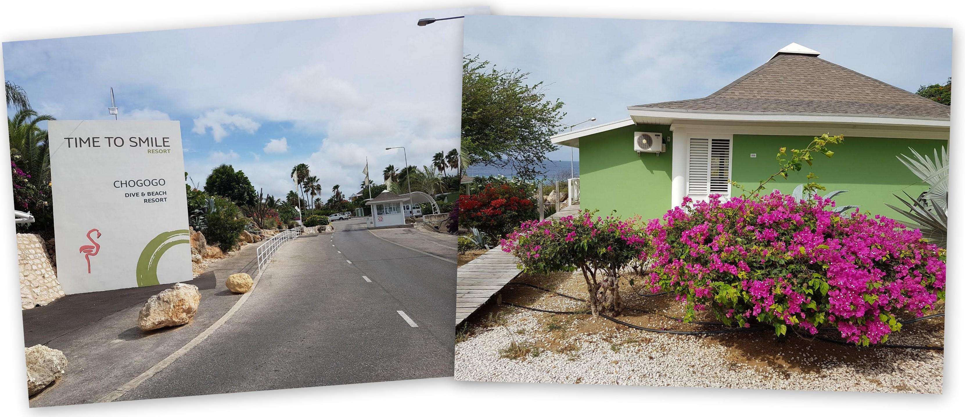 chogogo Curacao